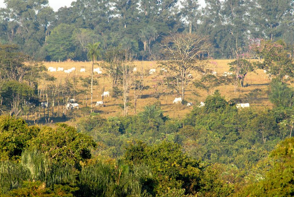 tabapuadocorrego.com.br a corrego 14