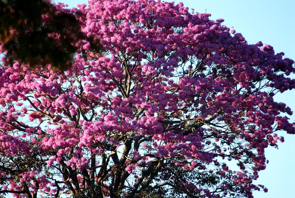 tabapuadocorrego.com.br a corrego 16