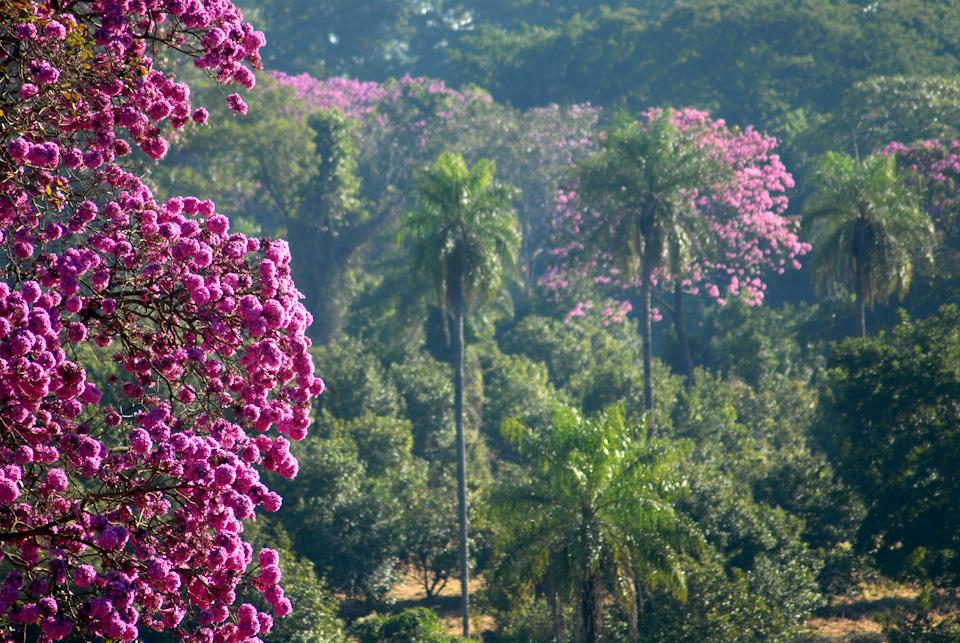 tabapuadocorrego.com.br a corrego 21