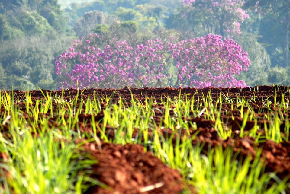 tabapuadocorrego.com.br a corrego 22