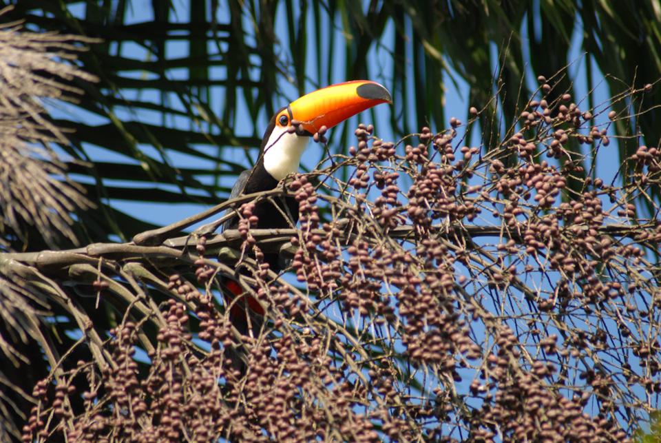 tabapuadocorrego.com.br a corrego 28
