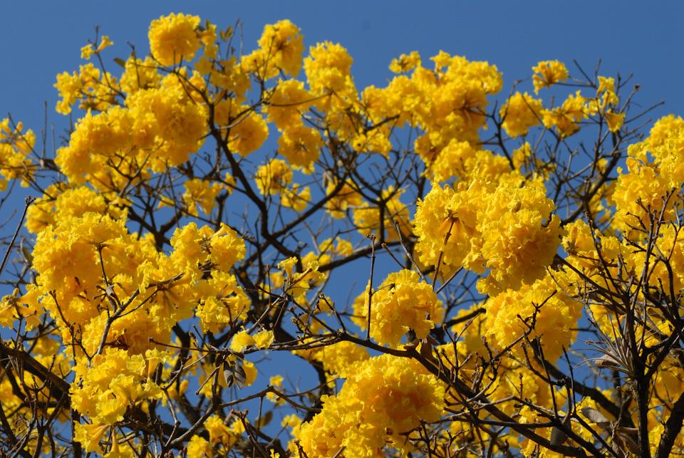 tabapuadocorrego.com.br a corrego 38